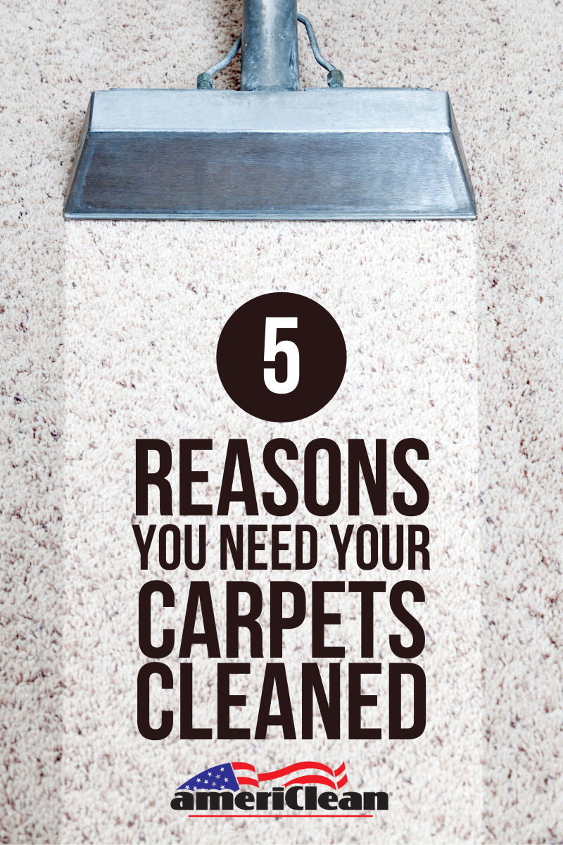 5 Reasons Your Need Your Carpets Cleaned